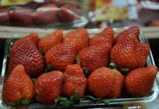 Produtores de morango paulistas colhem primeiros frutos certificados pelo Ministério da Agricultura