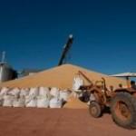 O fluxo no transporte de milho dos estoques da Companhia Nacional de Abastecimento (Conab) – localizados em Mato Grosso e ...