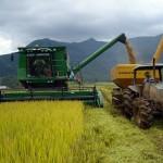 O interesse de comercialização de arroz em casca por orizicultores e beneficiadoras do Rio Grande do Sul esteve ligeiramente menor ...