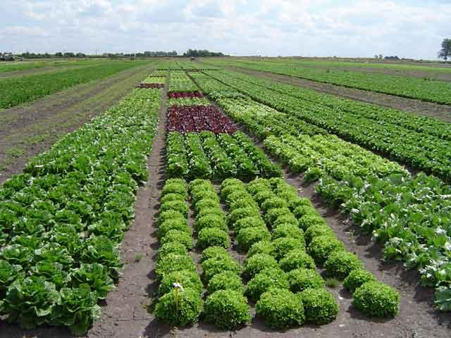 Embrapa divulga tecnologias para agricultura org nica em for Importancia economica ecologica y ambiental de los viveros forestales