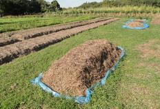 compostagem organica