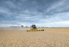 Técnicos do Ministério da Agricultura divulgaram um relatório na última semana, que aponta que as lavouras de trigo da Argentina ...