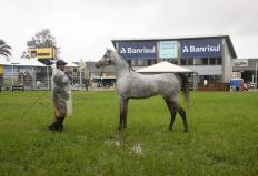 exposicao internacional de cavalos arabes