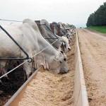 Dados divulgados pela Associação dos Criadores de Mato Grosso (Acrimat) indicam que os produtores do Estado de Mato Grosso reduziram ...