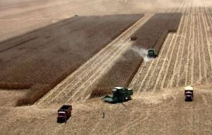 Segundo informações do Outlook Fiesp 2013, uma pesquisa realizada pelo Departamento de Agronegócio (Deagro) da Federação das Indústrias do Estado de São Paulo (Fiesp) que analisa e projeta o setor do agronegócio nos próximos 10 anos, a produção de arroz, ...