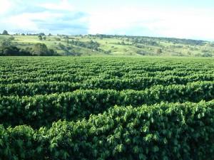 O Conselho Monetário Nacional (CMN) informou na sexta, dia 25/04, que o Fundo de Defesa da Economia Cafeeira (Funcafé) terá orçamento de R$ 2,925 bilhões para 2014. O montante estará dividido em recursos para estocagem (R$ 1,3 bilhão), operações de ...
