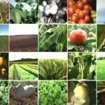 O Canal Rural mostrou, no último sábado, dia 30/11, os avanços tecnológicos da agricultura brasileira nos últimos anos e apresentou ...