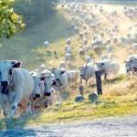 Segundo dados divulgado pelo Ministério do Desenvolvimento, Indústria e Comércio Exterior (MDIC), as exportações brasileiras de carne bovina somaram, até ...