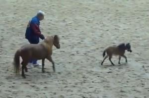 Cavalo Miniatura corre alucinado entre vários outros mini cavalos. Quantas pessoas serão necessárias para pega-lo? Sobre Cavalo Miniatura ou Mini ...