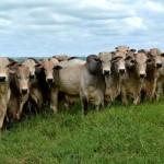 Confira os índices do Boletim Agronegócio.net desta quinta-feira, 13 de fevereiro 2014. Boi Os preços do boi gordo seguem em ...