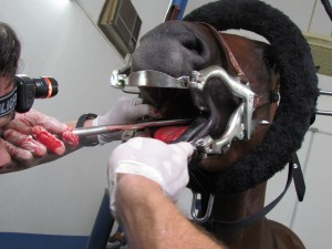 O Jornal da Pecuária recebeu o Dr. Ciro Franco, um dos pioneiros na área no país, formado em medicina veterinária, para explicar mais sobre odontologia equina. Confira a entrevista: Fonte: Canal Rural