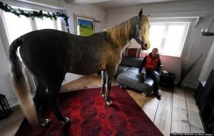 """Durante o furacão """"Xaver"""", que varreu o norte da Alemanha em dezembro do ano passado, a médica Stephanie Arnd, uma moradora da cidade de Holt, abrigou seu cavalo árabe, de nome Nasar, dentro de sua casa. O cavalo gostou tanto ..."""