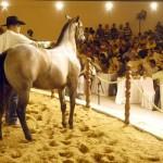 A Associação Brasileira de Criadores de Cavalo Quarto de Milha (ABQM) está contente com os resultados obtidos no ano de ...