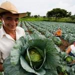 O Plano Safra da Agricultura Familiar para o período 2014/15 terá R$ 24,1 bilhões para investimento e custeio – cerca ...