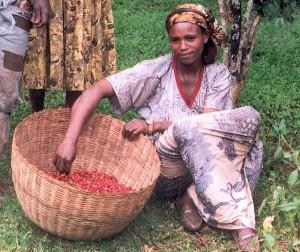 Segundo estudo do grupo de pesquisa Café Africa International, com sede na Suíça, a África deve voltar a liderar a produção global de café dentro de uma década. – Eu tenho convicção de que a África será o maior fornecedor ...
