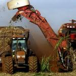 A estimativa de cana de cana-de-açúcar produzida na safra 2014/15 é de 659 milhões de toneladas, de acordo com o 2º levantamento da safra pelo Ministério da Agricultura, Pecuária e Abastecimento (Mapa) e com a Companhia Nacional de Abastecimento (Conab), ...