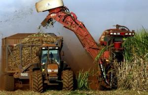 A estimativa de cana de cana-de-açúcar produzida na safra 2014/15 é de 659 milhões de toneladas, de acordo com o ...