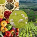 O Ministério da Agricultura reduziu de 2,1% para 2% a estimativa de crescimento do valor bruto da produção agropecuária (VBP) ...