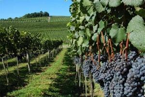 Congresso Mundial de Uva e Vinho em Bento Gonçalves (RS)