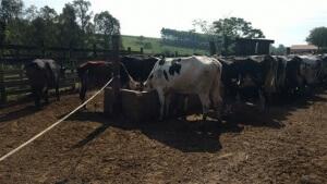 Como reduzir o desperdício na fazenda produtora de leite?