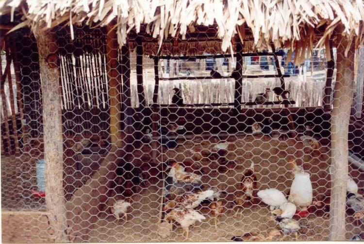 Como construir um galinheiro