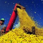 O secretário de Política Agrícola do Ministério da Agricultura, Caio Rocha, afirmou nesta quinta, dia 6, que o governo pretende ...