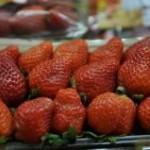 Para diversificar a produção do morango, produtores da região do Vale do Caí, no Rio Grande do Sul, estão apostando ...