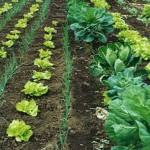 As primeiras propostas para a criação do Plano Nacional de Agroecologia e Produção Orgânica foram apresentadas em reunião da Câmara ...