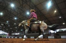 Depois dos bons resultados conquistados pelo cavalo crioulo Alma de Gato Cala Bassa – que ficaram entre os melhores da NRHA Futurity, uma das principais provas de rédea do mundo, disputada em Oklahoma City, nos Estados Unidos, os norte-americanos se ...