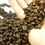 Os preços do café arábica, pagos ao produtor em outubro, atingiram o menor valor dos últimos 11 anos. A expectativa ...