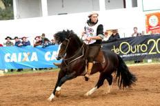 A comercialização do cavalo Crioulo durante a Expointer 2013 está quebrando recordes. Já foram realizados cinco dos oito remates agendados e o faturamento já chega a R$ 7.4 milhões e genéticas de ponta estão sendo vendidas e compradas nas pistas ...