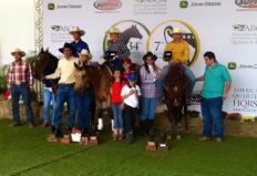 Começaram nesta terça, dia 08, em Avaré, noroeste de São Paulo, os dois últimos eventos oficiais da Associação Brasileira de Criadores de Cavalo Quarto de Milha (ABQM), o 34º Potro do Futuro e a 7ª Copa dos Campeões. O número ...