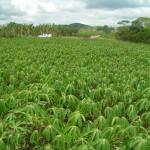 Confira os índices do BoletimAgronegócio.netdesta segunda-feira, 10 de março 2014. Citros A oferta de lima ácida tahiti está abaixo da ...