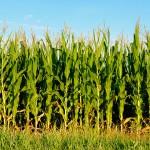 Confira os índices do Boletim Agronegócio.net desta terça-feira, 11 de fevereiro 2014. Açúcar O número de negócios envolvendo o açúcar ...