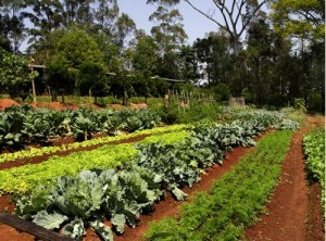 O Brasil fechou 2013 com saldo positivo para a agricultura orgânica, segundo dados do Cadastro Nacional de Produtores Orgânicos. O número de organismos avaliadores de conformidade do setor mais que dobrou e o montante de produtores e unidades produtivas teve ...