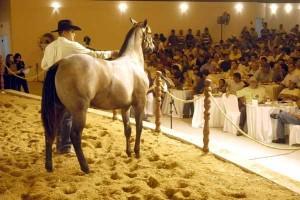A Associação Brasileira de Criadores de Cavalo Quarto de Milha (ABQM) está contente com os resultados obtidos no ano de 2013. Segundo dados fornecidos pelas empresas leiloeiras, a raça ultrapassou a marca de R$ 168 milhões em vendas no ano ...