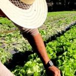 O Conselho Monetário Nacional (CMN) reabriu o prazo para renegociação de dívidas do Programa Nacional de Fortalecimento da Agricultura Familiar ...