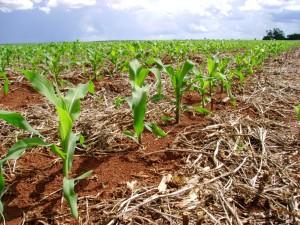 A previsão do tempo norte-americana está prevendo frio intenso nos Estados Unidos. Segundo o analista de mercado da Agrinvest, Marcos Araujo, essa condição poderia prejudicar o plantio do milho. Araujo acredita que a onda de frio pode pressionar os preços ...