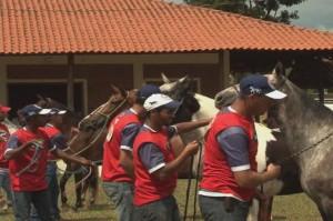 O programa Mangalarga Marchador TV, exibido no último domingo, dia 13/04, no Canal Rural, mostrou como conseguir o melhor desempenho do cavalo com o menor desgaste possível, durante o segundo Simpósio de Equitação e Marcha do Cavalo Mangalarga Marchador, além ...