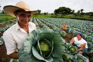 O Plano Safra da Agricultura Familiar para o período 2014/15 terá R$ 24,1 bilhões para investimento e custeio – cerca de 14% mais que na safra atual (2013/14). O anúncio será formalizado na próxima segunda-feira (26), mas foi antecipado pelo ...