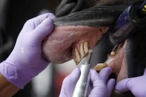 Você sabia que os dentes dos cavalos crescem continuamente e que esses animais precisam ir ao dentista com a mesma frequência que os humanos? Em Gurupi, sul do Tocantins, é comum ver cavalos sendo treinados para as competições de três ...