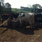 13 passos para resolver problemas e reduzir o desperdício na fazenda produtora de leite