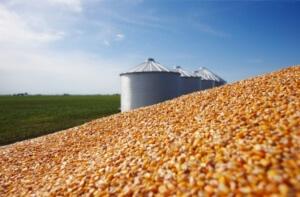 Produção brasileira de grãos deve ser de 196,5 milhões de toneladas. A área cultivada de grãos chegará a 58,2 milhões de hectares