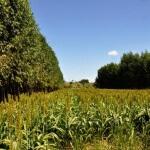 Constatação é da Embrapa Agrossilvipastoril, que avaliou quatro Unidades de Referência Tecnológica e Econômica