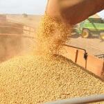 Preço da soja em julho no mundo Os preços externos da soja em grão e do farelo caíram com força ...