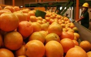 Exportações agropecuárias brasileiras crescem 3,9% em agosto.
