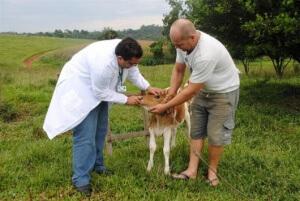 Companhia catarinenseoferece salário inicial deR$ 7.580 para veterinários.Cooperativa no Paranáestá em busca de1.100 profissionais